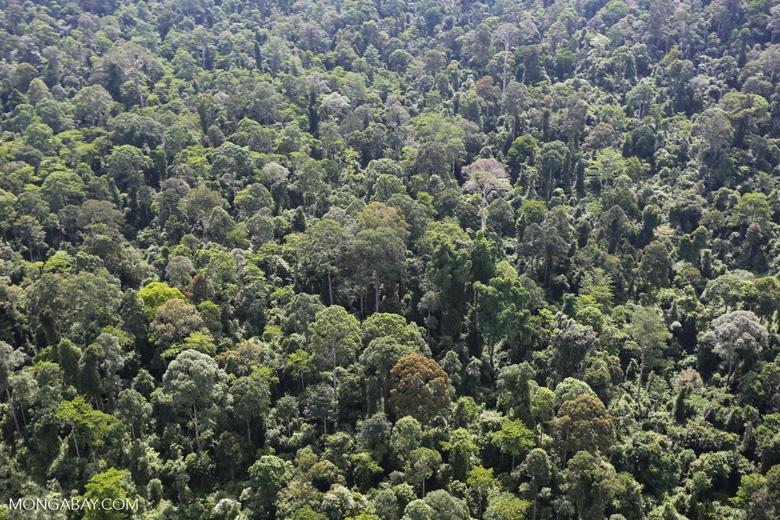 Borneo rainforest -- sabah_aerial_2483