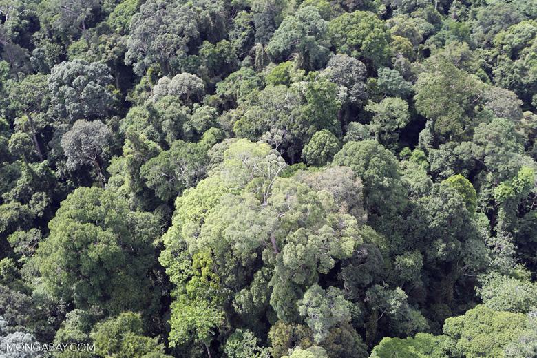Borneo rainforest -- sabah_aerial_2531