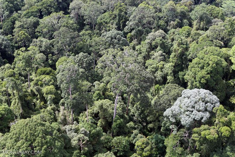 Borneo rainforest -- sabah_aerial_2532