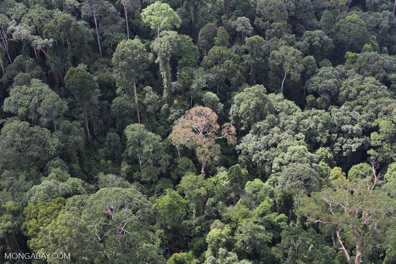 Borneo rainforest -- sabah_aerial_2537