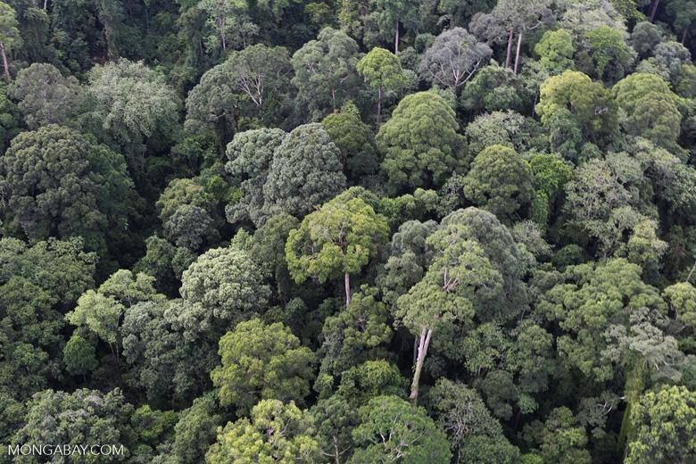 Borneo rainforest -- sabah_aerial_2547