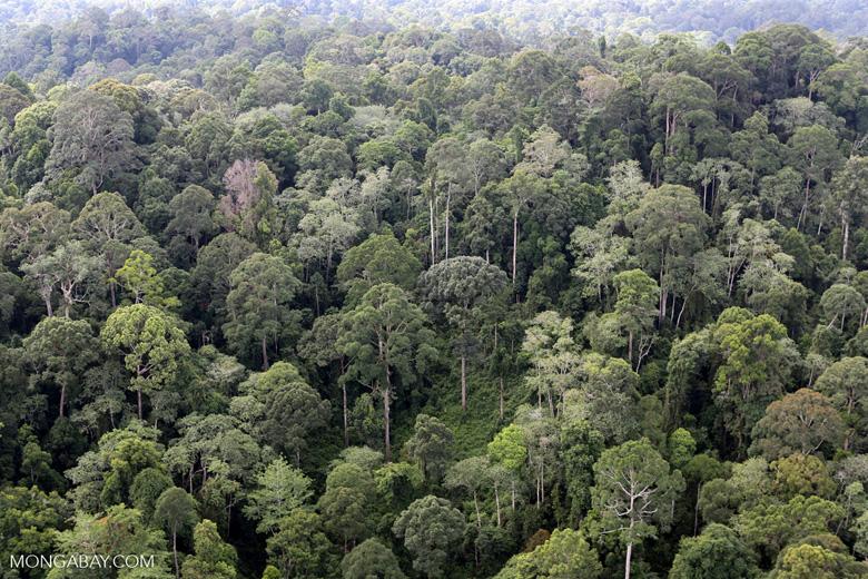 Borneo rainforest -- sabah_aerial_2552