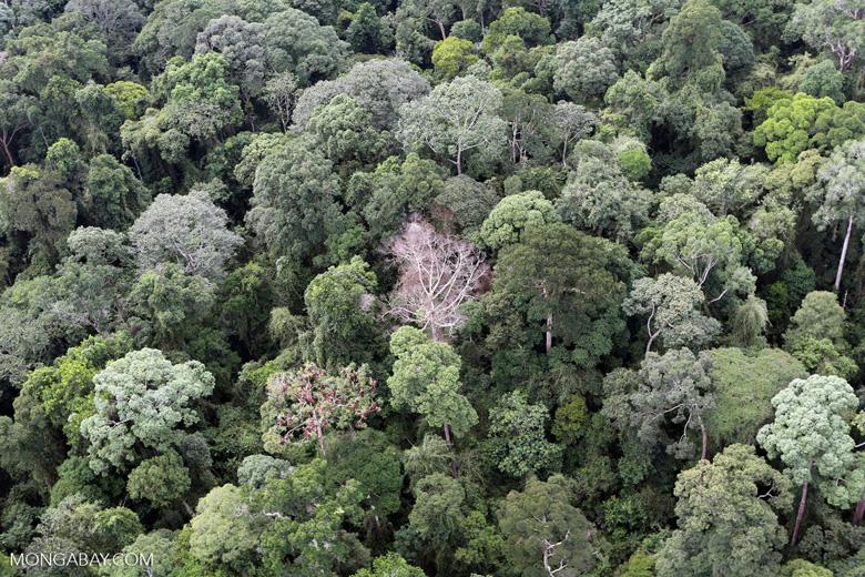 Borneo rainforest -- sabah_aerial_2562