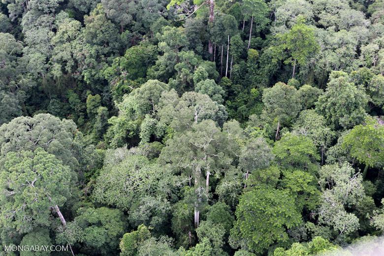 Borneo rainforest -- sabah_aerial_2563