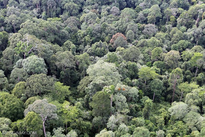 Borneo rainforest -- sabah_aerial_2573