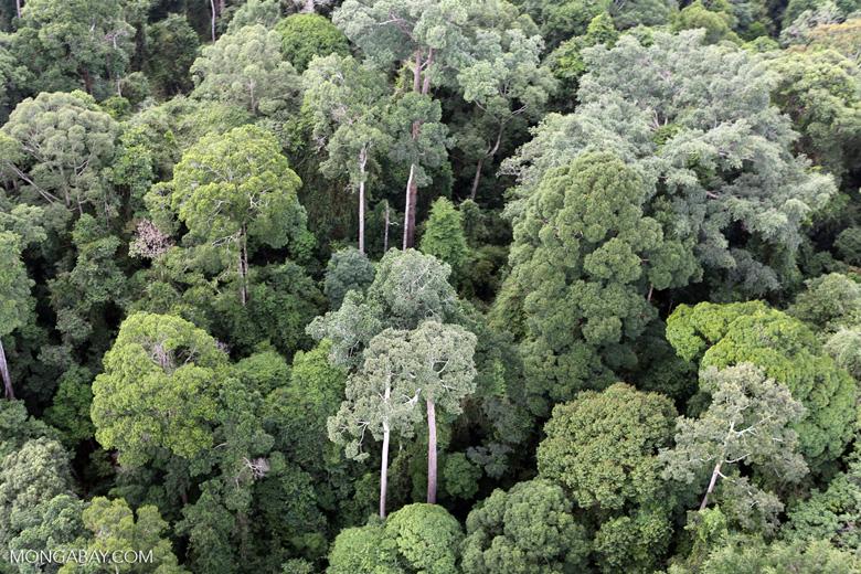 Borneo rainforest -- sabah_aerial_2581