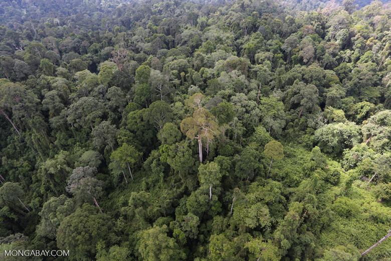 Borneo rainforest -- sabah_aerial_2595