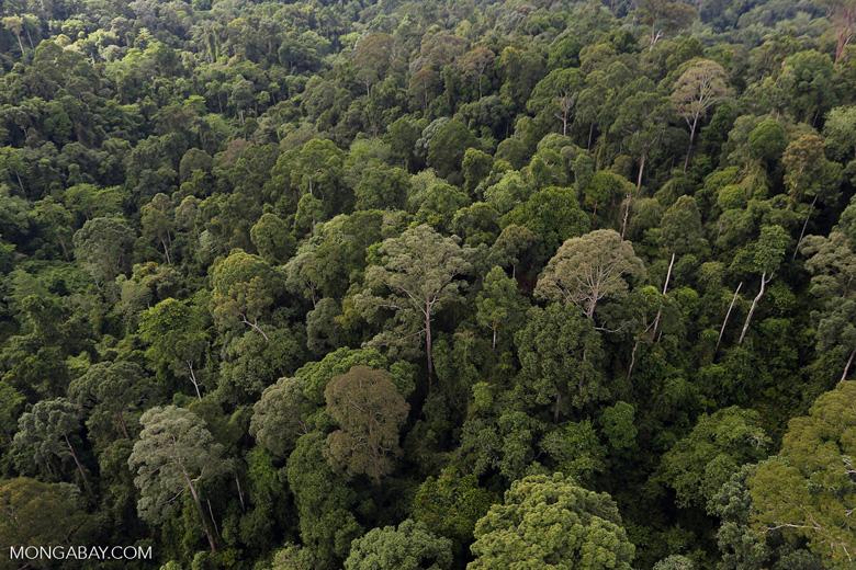 Borneo rainforest -- sabah_aerial_2617