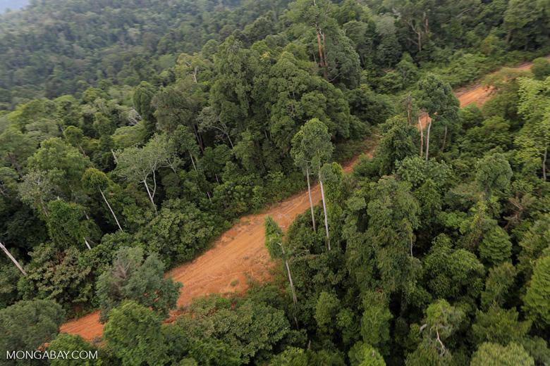 Logging road -- sabah_aerial_2670