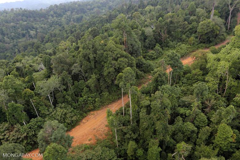 Logging road -- sabah_aerial_2671