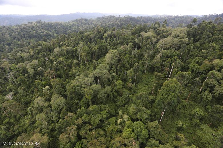 Borneo rainforest -- sabah_aerial_2683