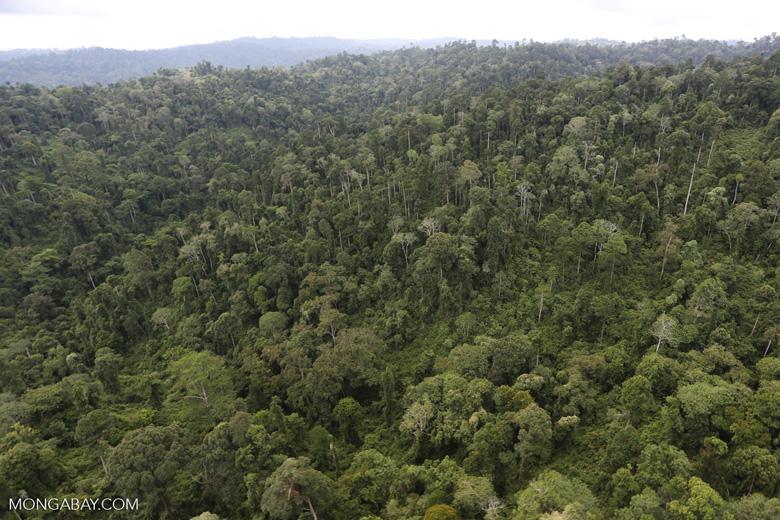 Borneo rainforest -- sabah_aerial_2685