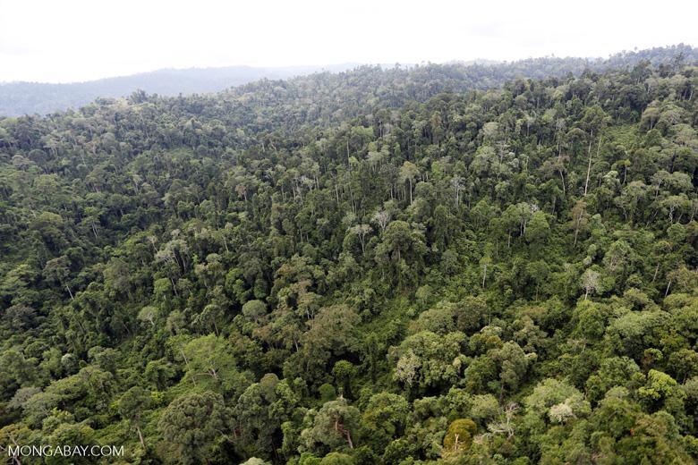Borneo rainforest -- sabah_aerial_2686