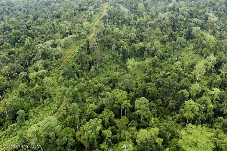 Aerial view of heavily logged rainforest
