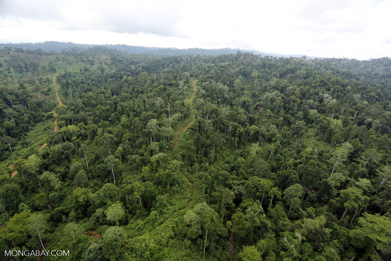 Aerial view of heavily logged rainforest -- sabah_aerial_2694