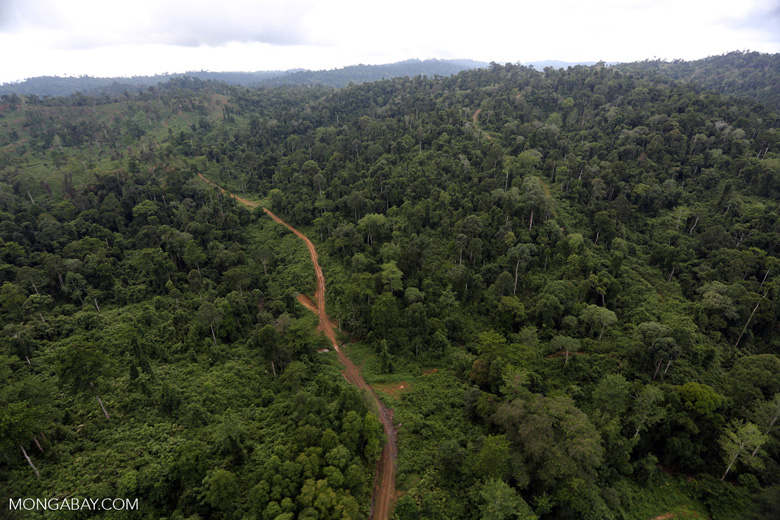 Aerial view of heavily logged rainforest -- sabah_aerial_2695