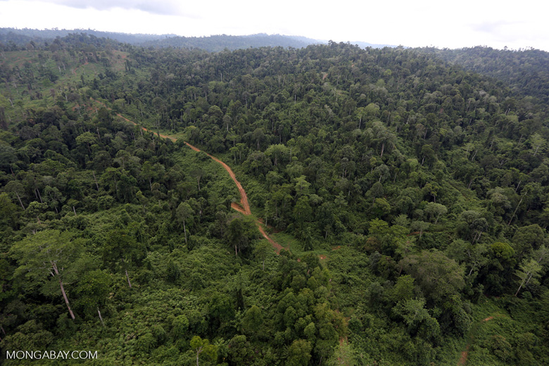 Aerial view of heavily logged rainforest -- sabah_aerial_2696