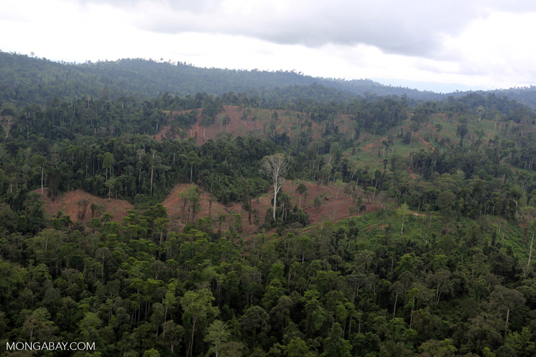 Aerial view of heavily logged rainforest -- sabah_aerial_2701