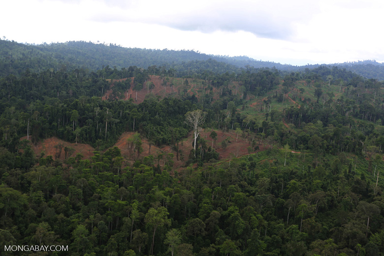 Aerial view of heavily logged rainforest -- sabah_aerial_2702