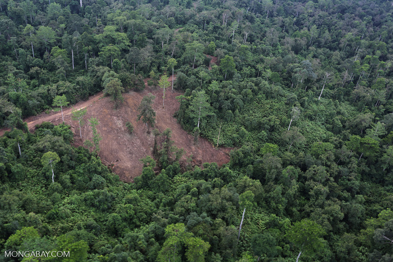 Aerial view of heavily logged rainforest -- sabah_aerial_2711