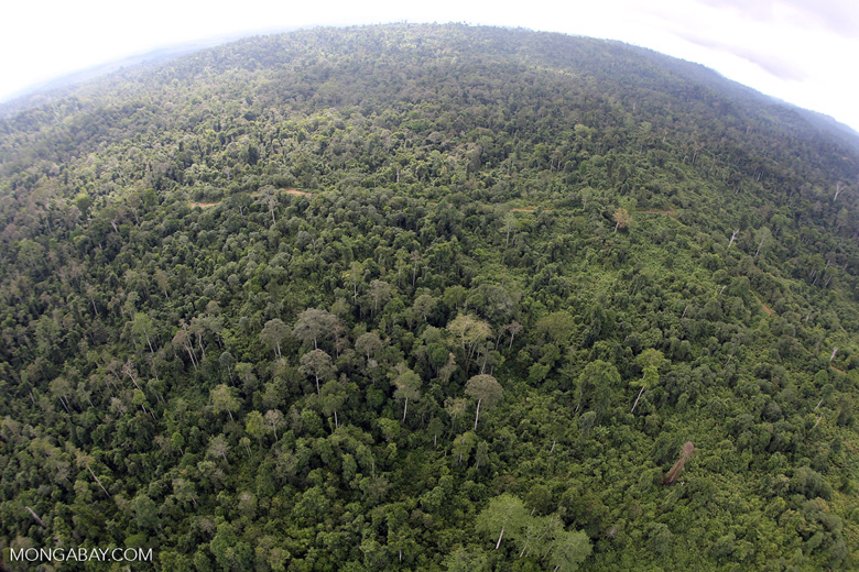 Aerial view of heavily logged rainforest -- sabah_aerial_2713