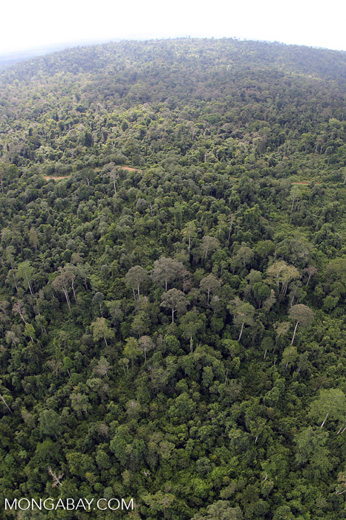 Aerial view of heavily logged rainforest -- sabah_aerial_2714