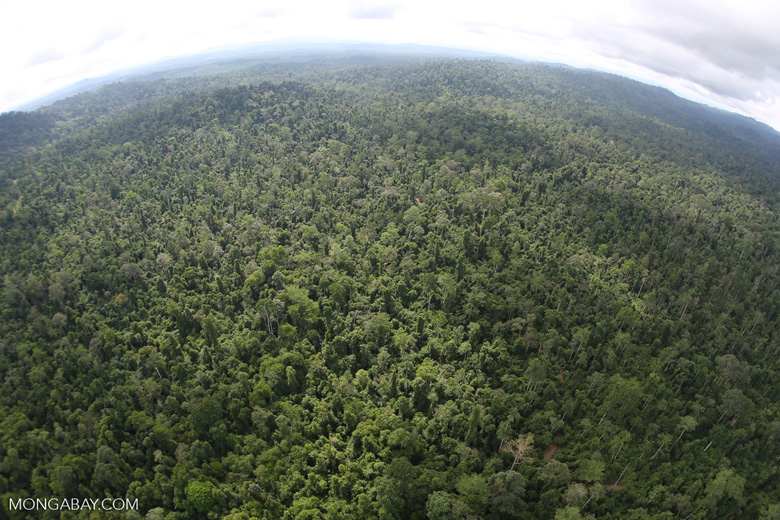 Aerial view of heavily logged rainforest -- sabah_aerial_2717