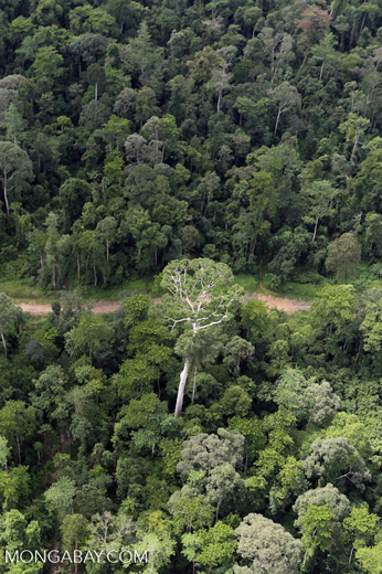 Aerial view of heavily logged rainforest -- sabah_aerial_2722