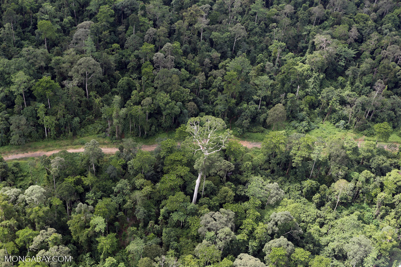 Aerial view of heavily logged rainforest -- sabah_aerial_2723