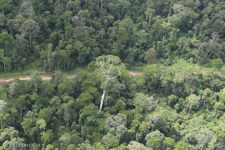 Aerial view of heavily logged rainforest -- sabah_aerial_2724