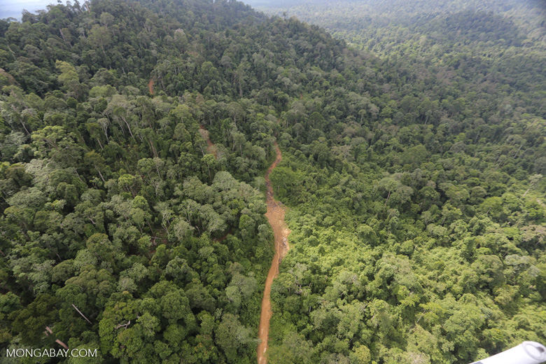 Aerial view of heavily logged rainforest -- sabah_aerial_2733