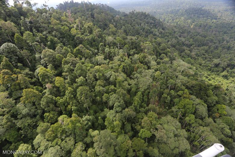 Selectively logged forest under FSC criteria -- sabah_aerial_2736