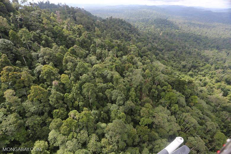 Selectively logged forest under FSC criteria -- sabah_aerial_2740