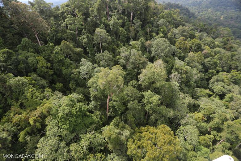 Selectively logged forest under FSC criteria -- sabah_aerial_2745