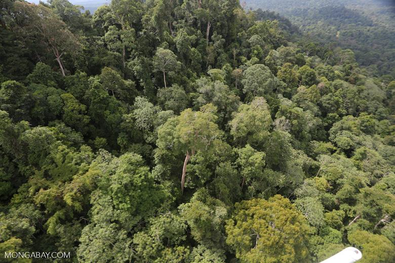 Selectively logged forest under FSC criteria -- sabah_aerial_2746