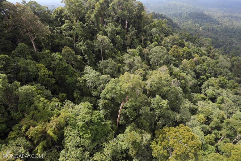 Selectively logged forest under FSC criteria -- sabah_aerial_2747