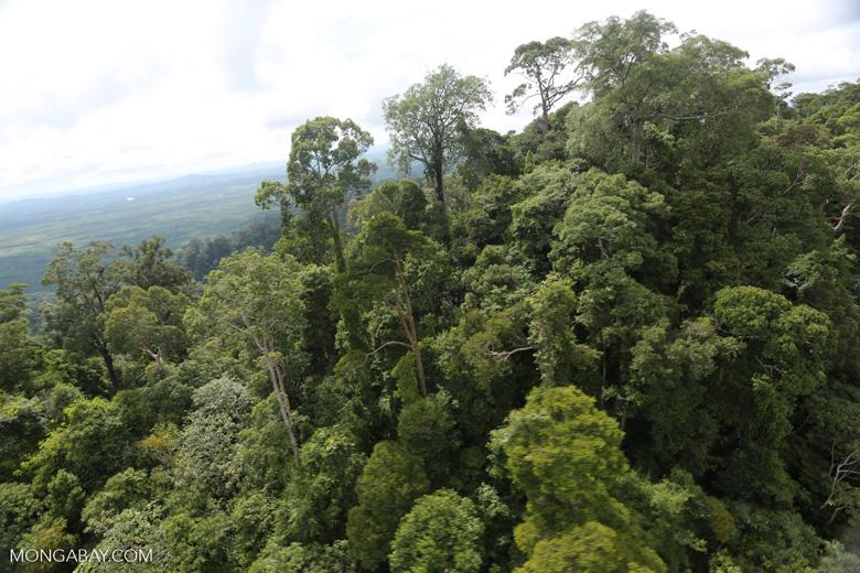 Selectively logged forest under FSC criteria -- sabah_aerial_2751