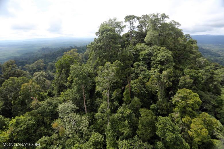 Selectively logged forest under FSC criteria -- sabah_aerial_2755