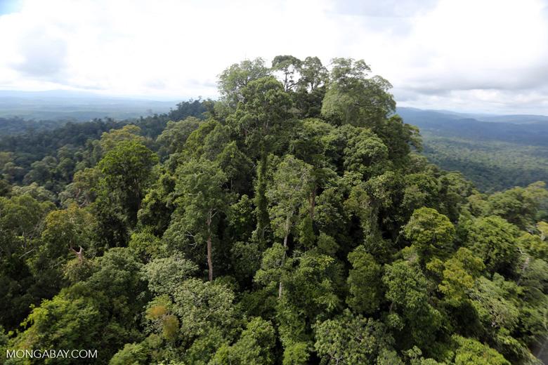 Selectively logged forest under FSC criteria -- sabah_aerial_2757