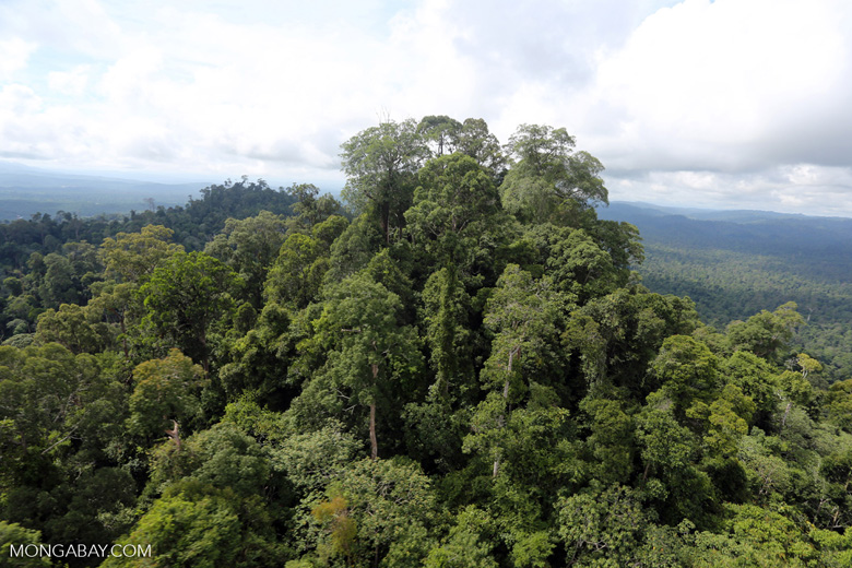 Selectively logged forest under FSC criteria -- sabah_aerial_2759