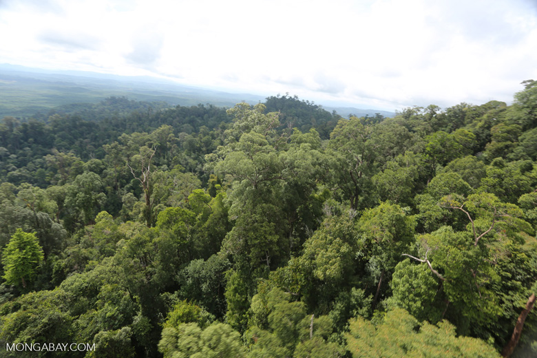 Selectively logged forest under FSC criteria -- sabah_aerial_2762