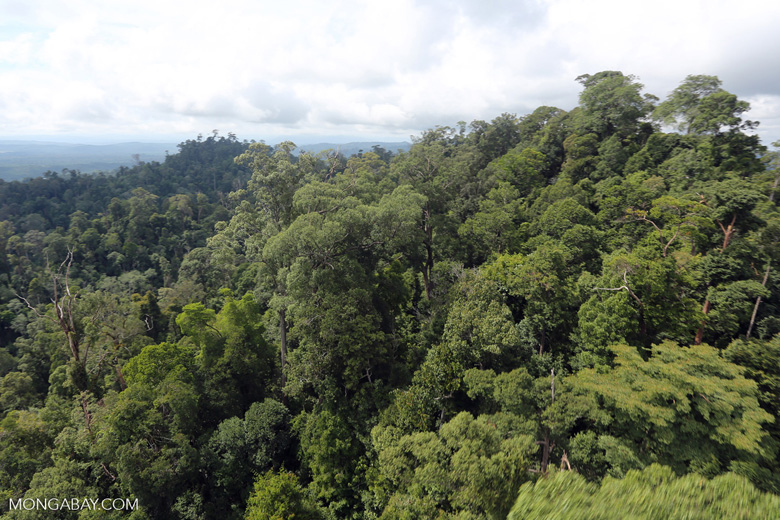 Selectively logged forest under FSC criteria -- sabah_aerial_2765
