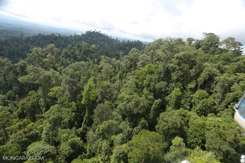 Selectively logged forest under FSC criteria -- sabah_aerial_2771