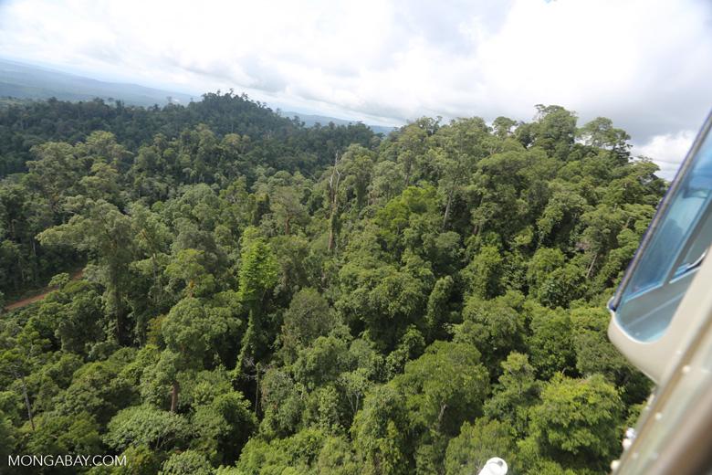 Selectively logged forest under FSC criteria -- sabah_aerial_2773