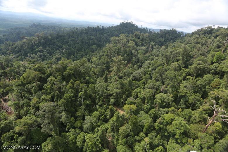 Selectively logged forest under FSC criteria -- sabah_aerial_2779