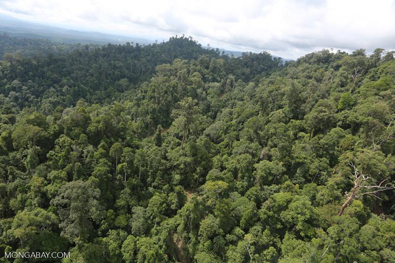 Selectively logged forest under FSC criteria -- sabah_aerial_2782