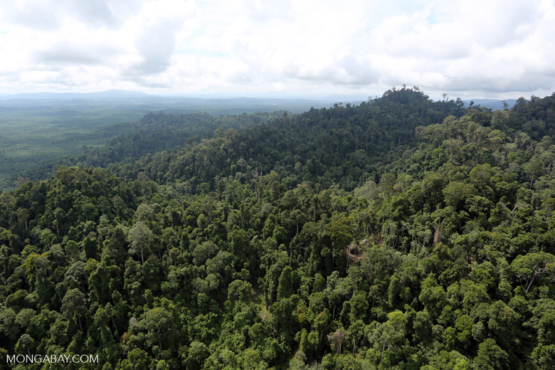 Selectively logged forest under FSC criteria -- sabah_aerial_2785