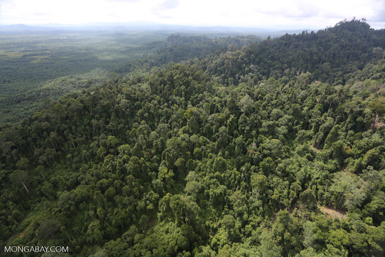 Heavily logged rainforest with an oil palm plantation in the distance -- sabah_aerial_2786