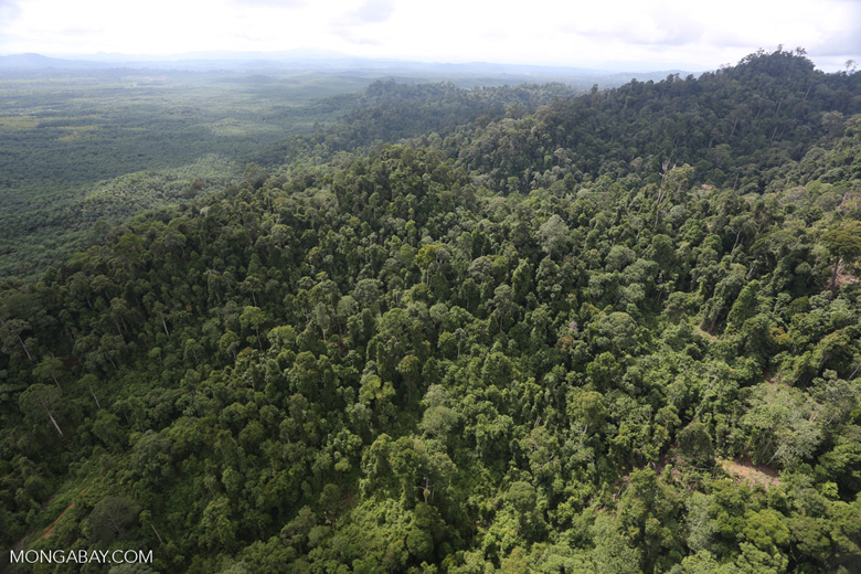 Heavily logged rainforest with an oil palm plantation in the distance -- sabah_aerial_2787