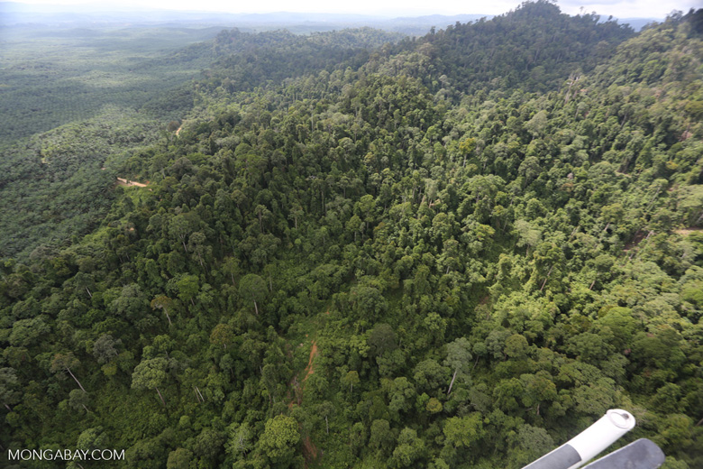 Heavily logged rainforest with an oil palm plantation in the distance -- sabah_aerial_2791